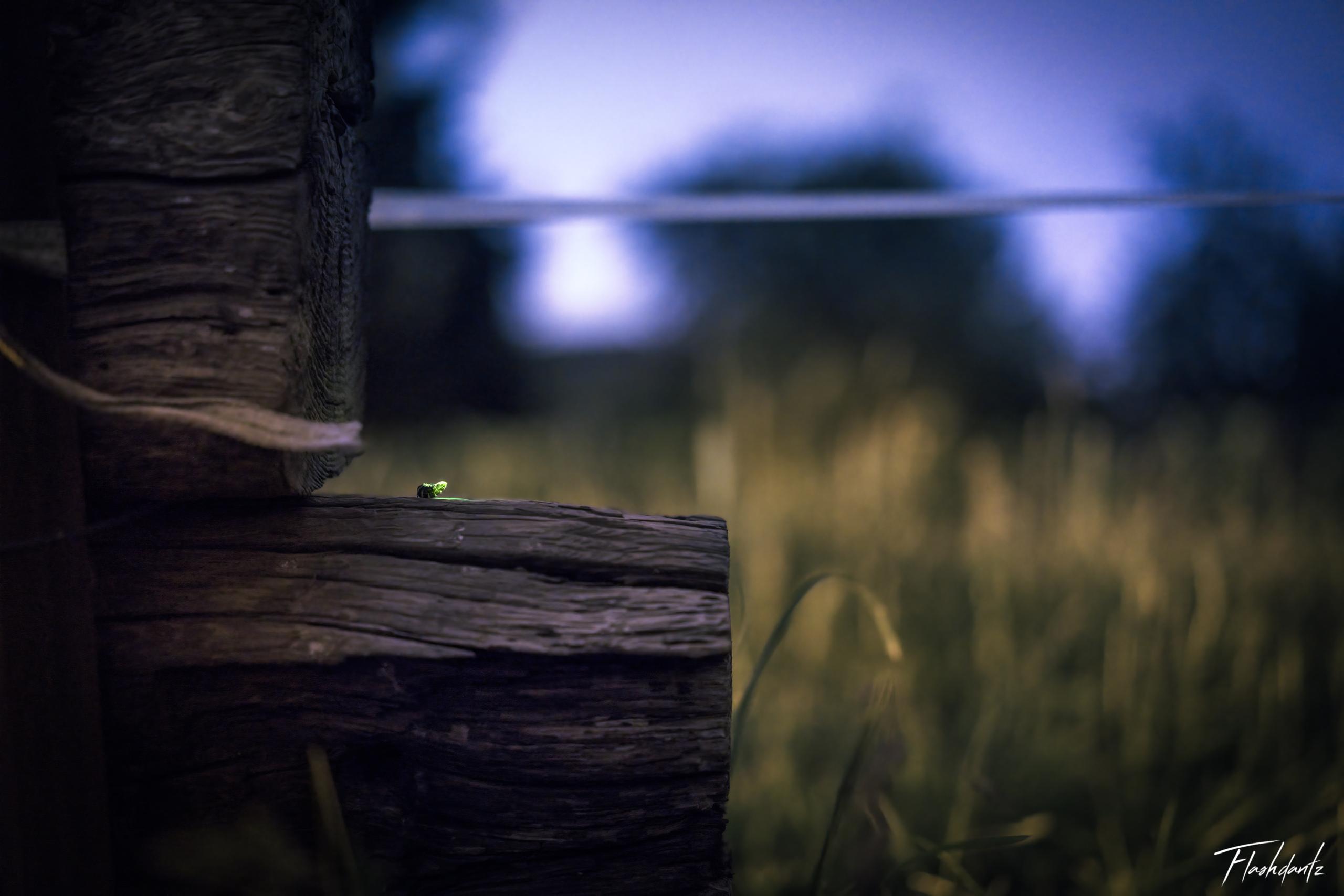 Un vers luisant sur du bois